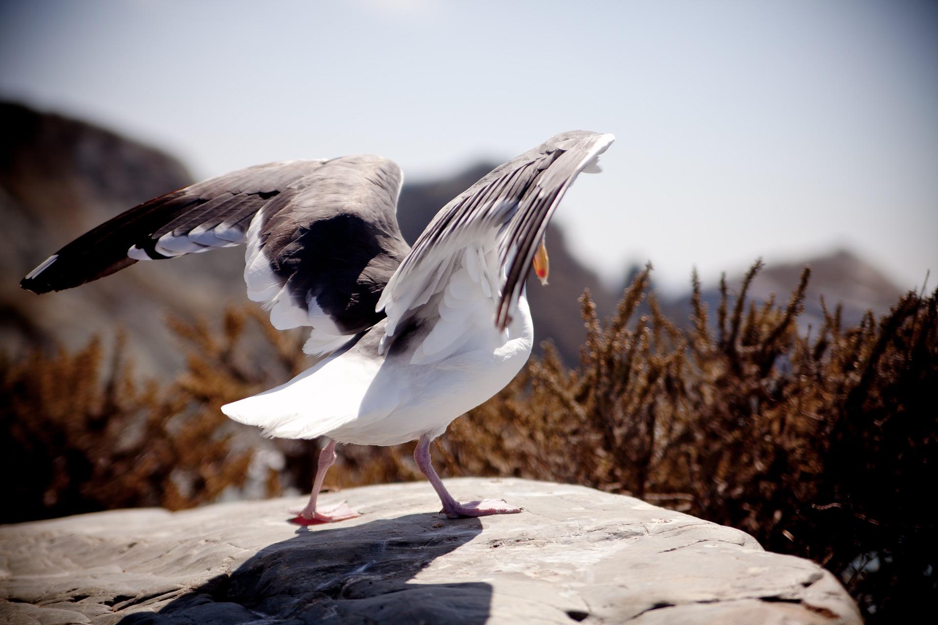 daj dziecku skrzydła