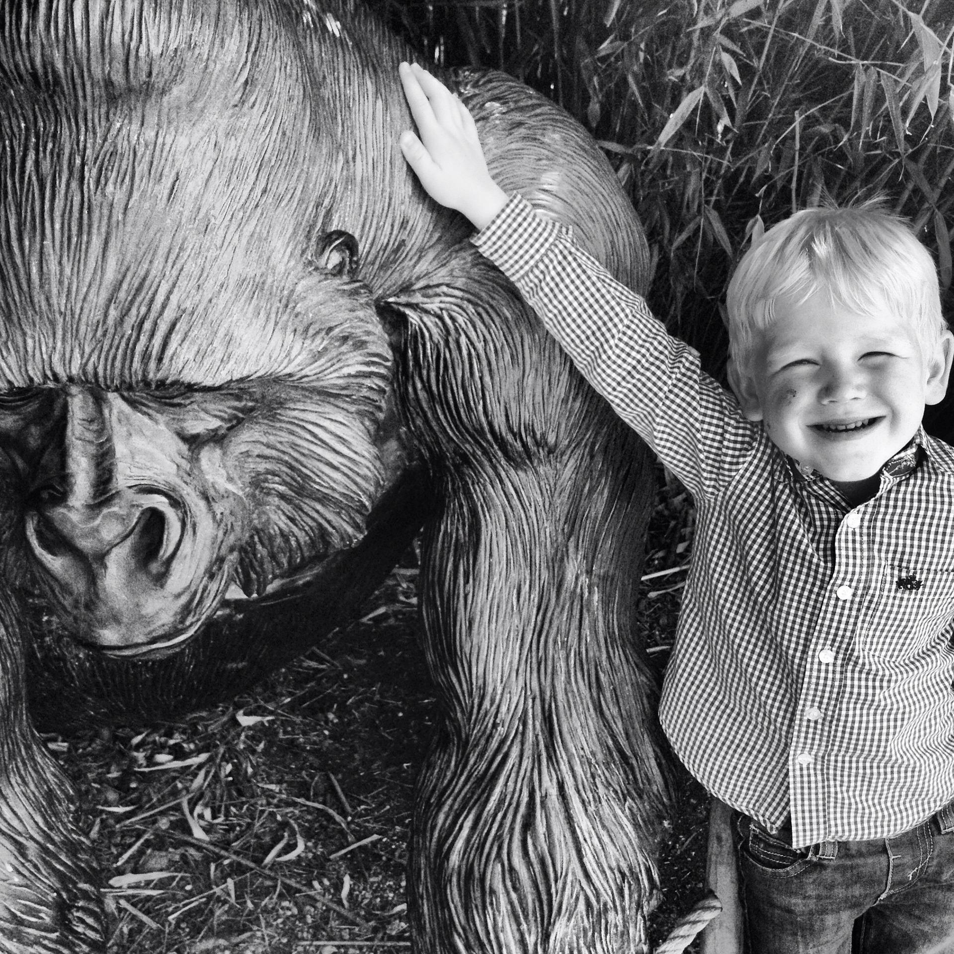 goryl i dziecko, selektywna uwaga